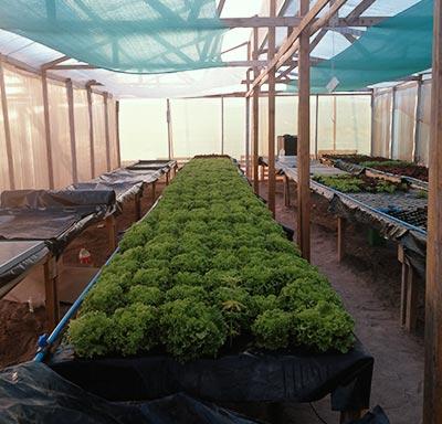 reciclan-expo-desierto