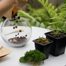 reciclan-the-planter-carnivoras