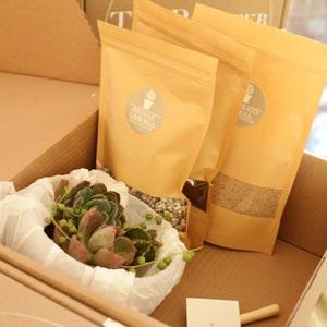 reciclan-suculentas-grey